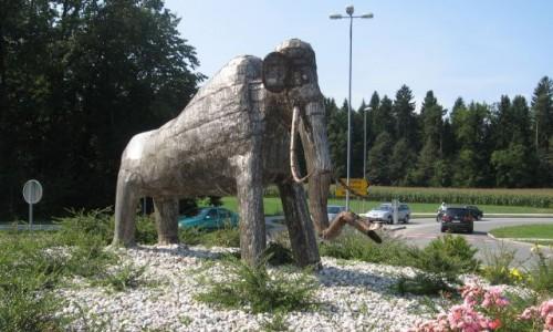 mamut(1)